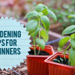 The Amazing and Great Gardening Tips for Beginners